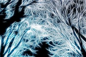 fractal-forest-12.jpg